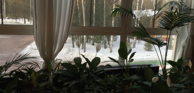 зимний сад (2)